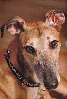 Greyhound Adoption Application