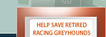 Help save retired racing greyhounds