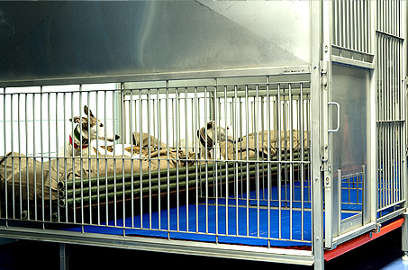 Kennel Construction: New Kennel Cages
