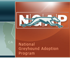 National Greyhound Adoption Program