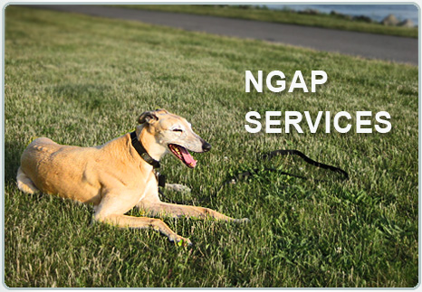 Nationa Greyhound Adoption Program Services