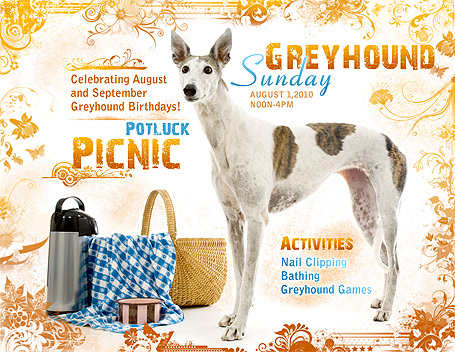 Greyhound Sunday Potluck Picnic