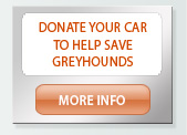 Donate your car to save greyhounds
