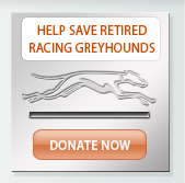 Donate to save a greyhound