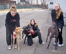 Donate your time: walk a greyhound