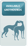 Adoptable Greyhounds